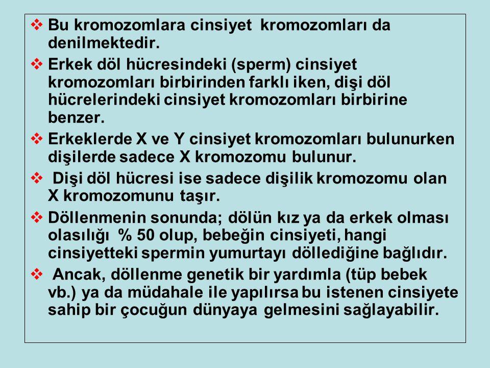  Bu kromozomlara cinsiyet kromozomları da denilmektedir.  Erkek döl hücresindeki (sperm) cinsiyet kromozomları birbirinden farklı iken, dişi döl hüc