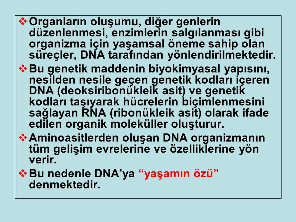  Organların oluşumu, diğer genlerin düzenlenmesi, enzimlerin salgılanması gibi organizma için yaşamsal öneme sahip olan süreçler, DNA tarafından yönl