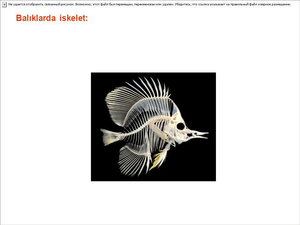 Balıklarda iskelet: Balıklarda iskelet dış ve iç olmak üzere ikiye ayrılır.