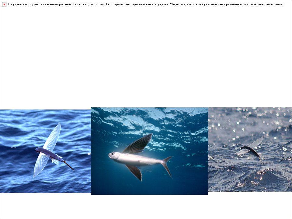 Kıkırdaklı balıklar (Chondrichthyes) Kemikli balıklar (Osteichthyes) olarak ikiye ayrılırlar.