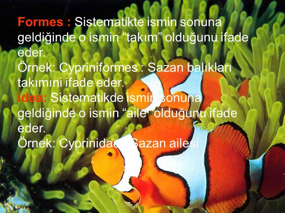 Formes : Sistematikte ismin sonuna geldiğinde o ismin takım olduğunu ifade eder.