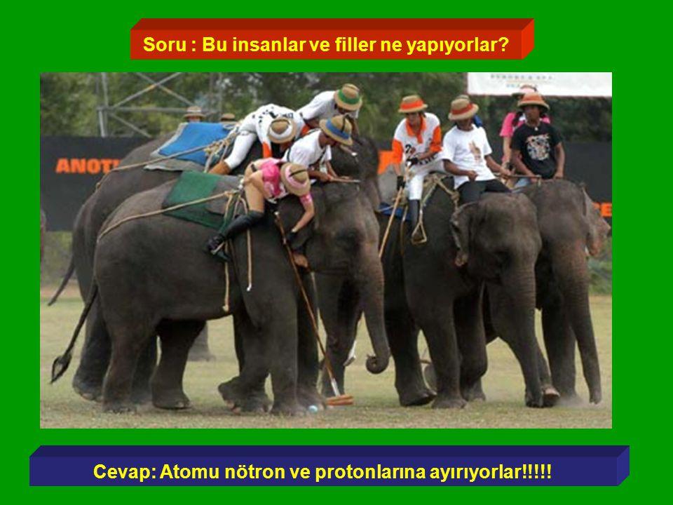 Soru : Bu insanlar ve filler ne yapıyorlar? Cevap: Atomu nötron ve protonlarına ayırıyorlar!!!!!