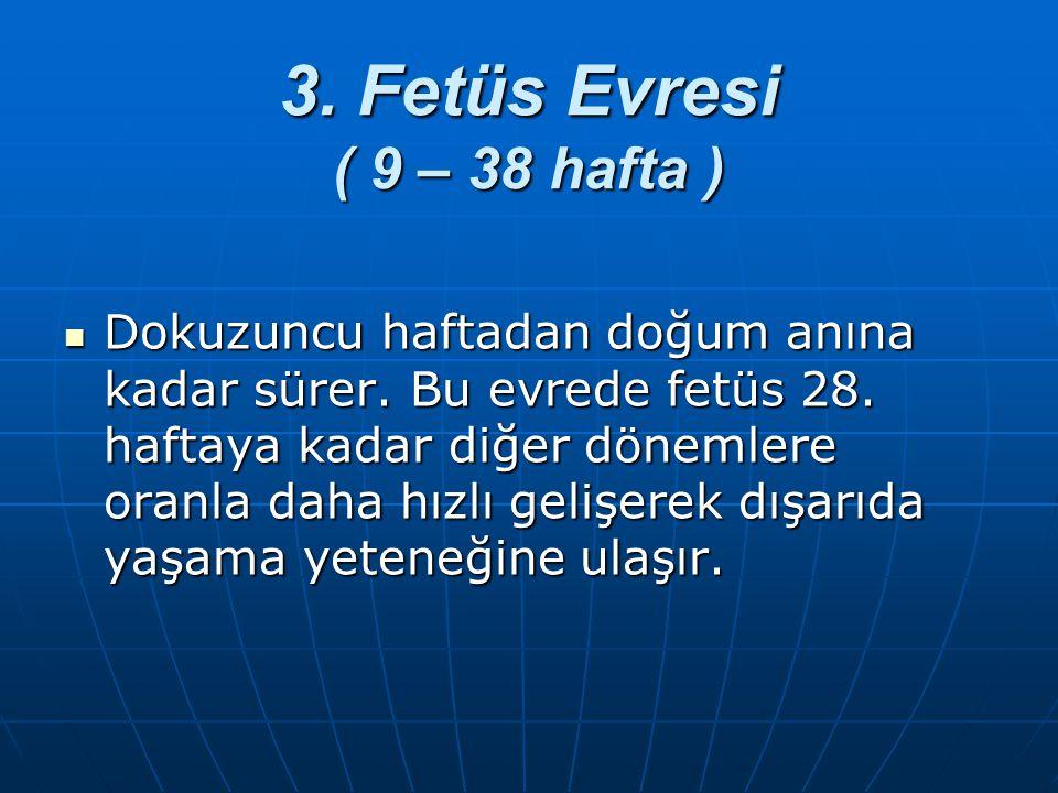3. Fetüs Evresi ( 9 – 38 hafta ) Dokuzuncu haftadan doğum anına kadar sürer. Bu evrede fetüs 28. haftaya kadar diğer dönemlere oranla daha hızlı geliş