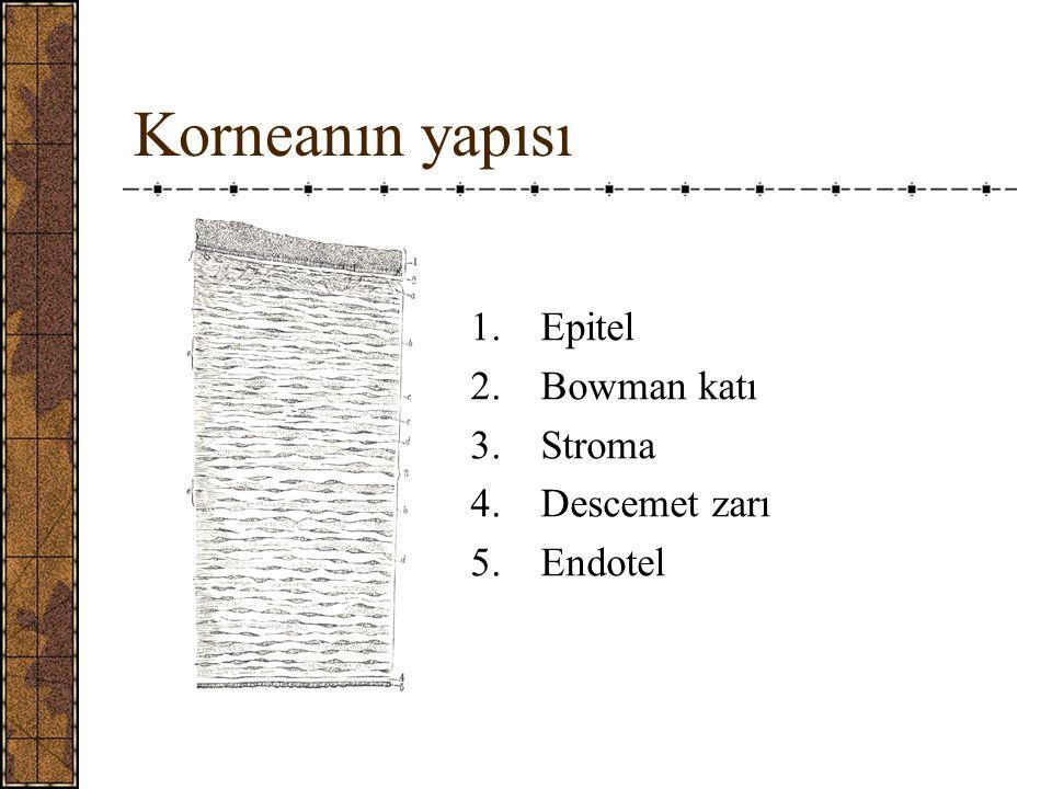 Korneanın yapısı 1.Epitel 2.Bowman katı 3.Stroma 4.Descemet zarı 5.Endotel