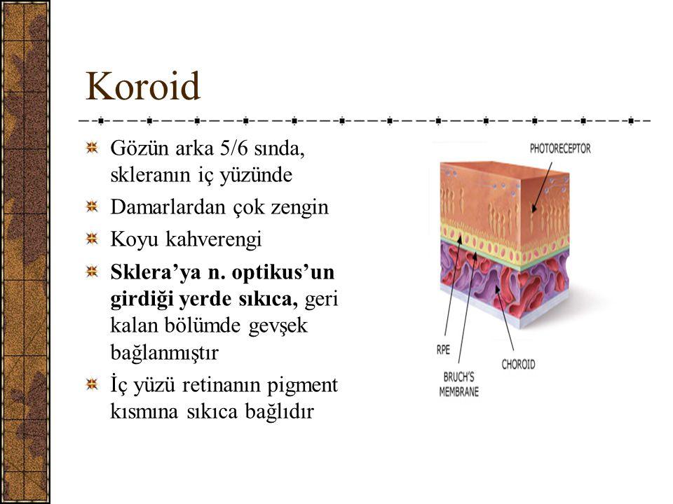 Koroid Gözün arka 5/6 sında, skleranın iç yüzünde Damarlardan çok zengin Koyu kahverengi Sklera'ya n.