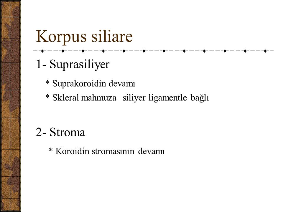 Korpus siliare 1- Suprasiliyer * Suprakoroidin devamı * Skleral mahmuza siliyer ligamentle bağlı 2- Stroma * Koroidin stromasının devamı