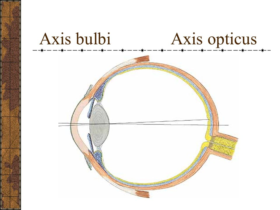 Ön kamara Arka kamara - Önde kornea, arkada iris ve lens bulunur.
