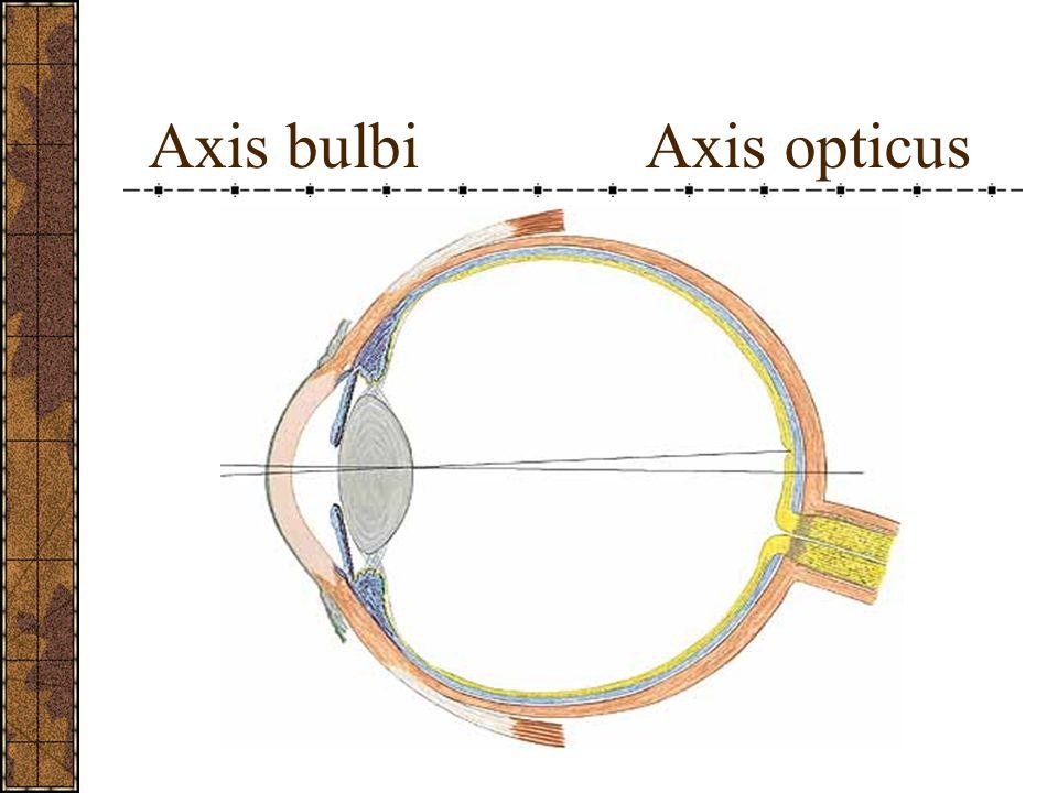 Göz küresinin çapları: Sagittal: 24 mm Transvers: 24 mm Vertikal: 23,5 mm