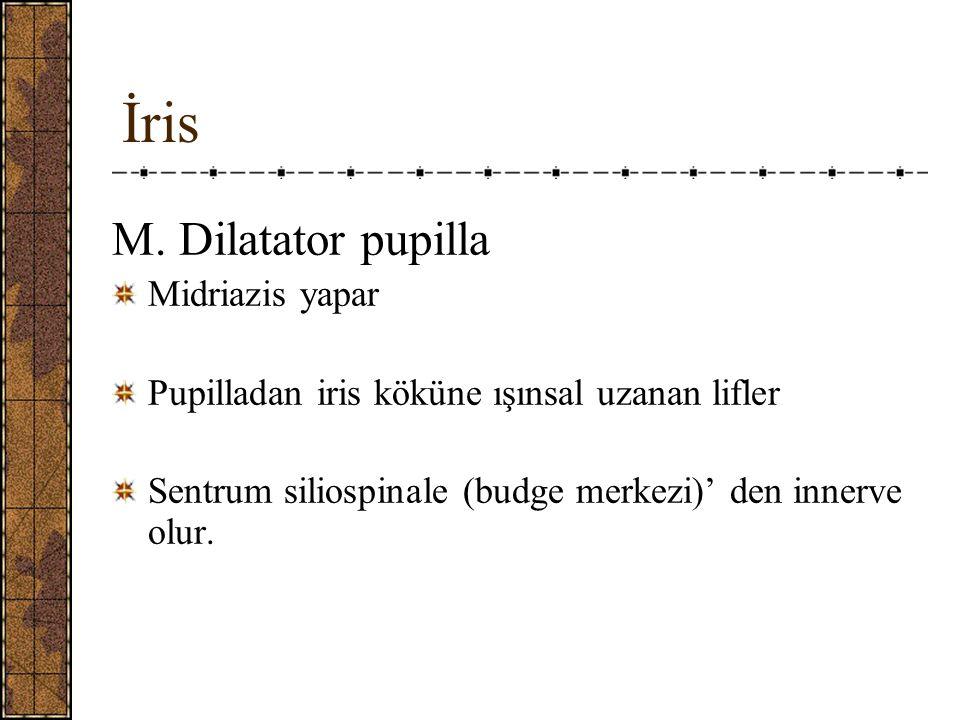 İris M.