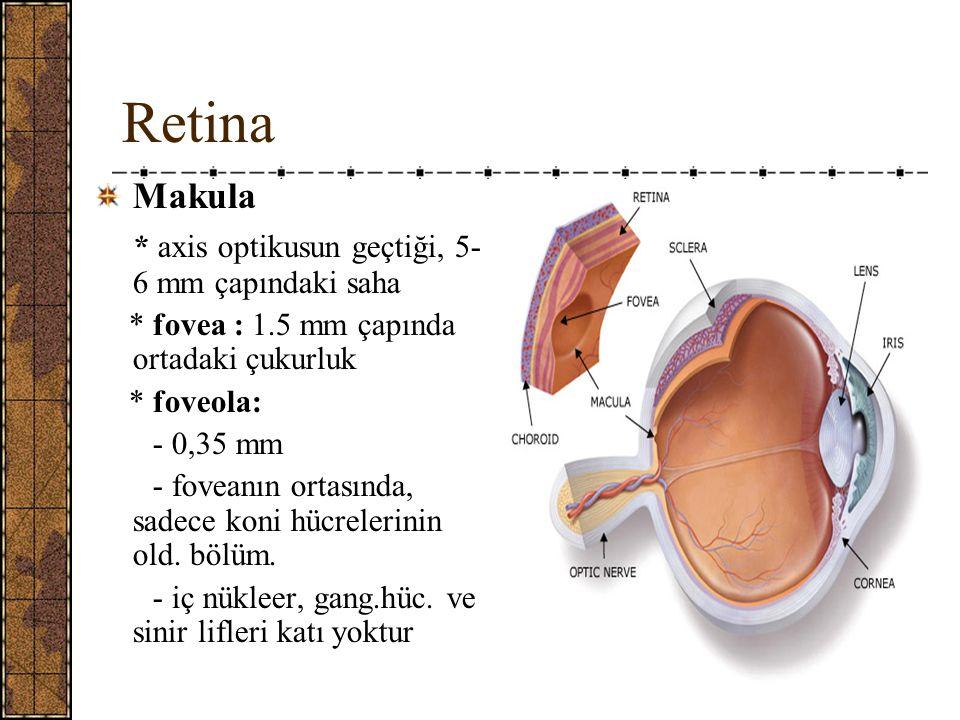Retina Makula * axis optikusun geçtiği, 5- 6 mm çapındaki saha * fovea : 1.5 mm çapında ortadaki çukurluk * foveola: - 0,35 mm - foveanın ortasında, sadece koni hücrelerinin old.
