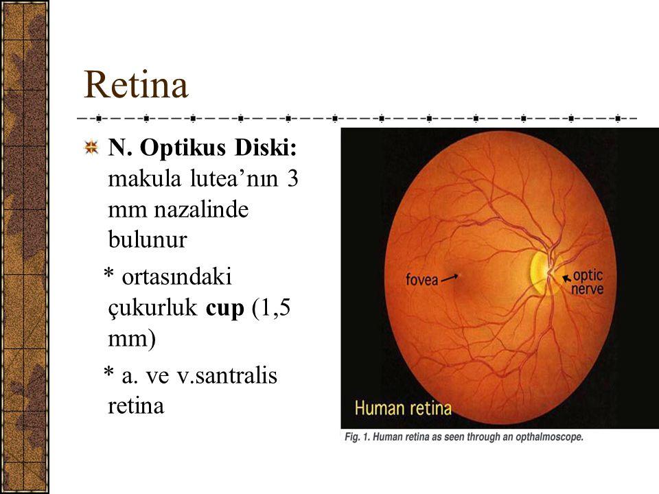 Retina N.