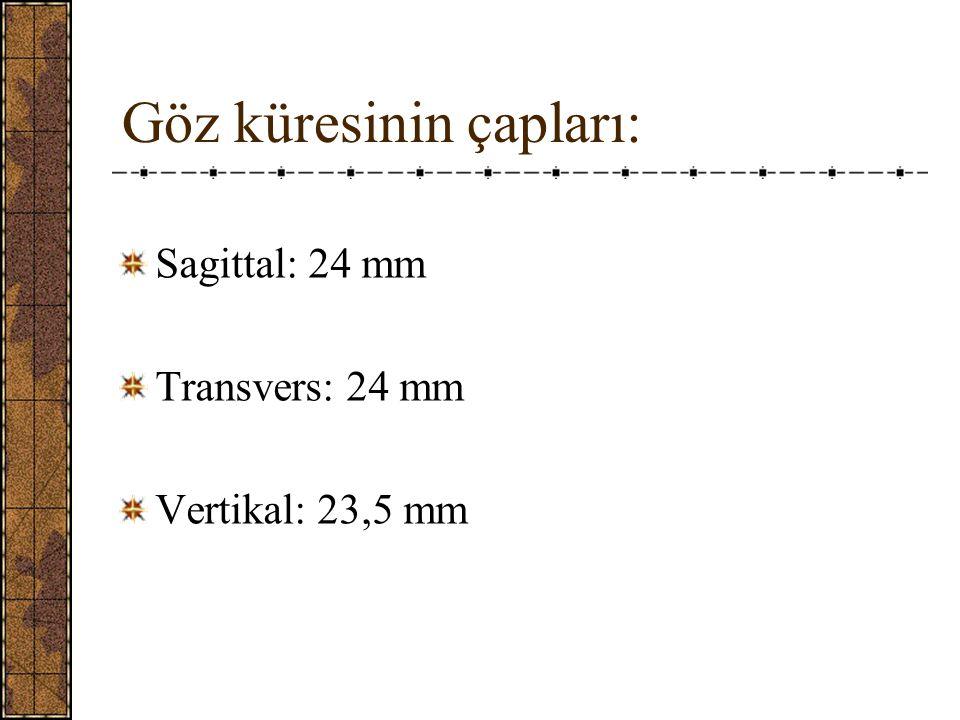 III- Tunica nervosa bulbi (Retina) 1- Pigment epiteli * uveanın iç yüzünü örter 2- Sensoriyel retina * pigment epiteline yaslanmıştır * Ora serrataya kadar uzanır Maküla ile optik sinir arası 0,23 mm, foveola 0,1 mm, ora serrata 0,11 mm