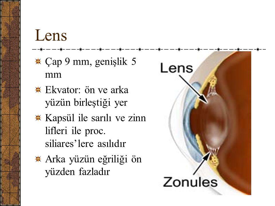 Lens Çap 9 mm, genişlik 5 mm Ekvator: ön ve arka yüzün birleştiği yer Kapsül ile sarılı ve zinn lifleri ile proc.