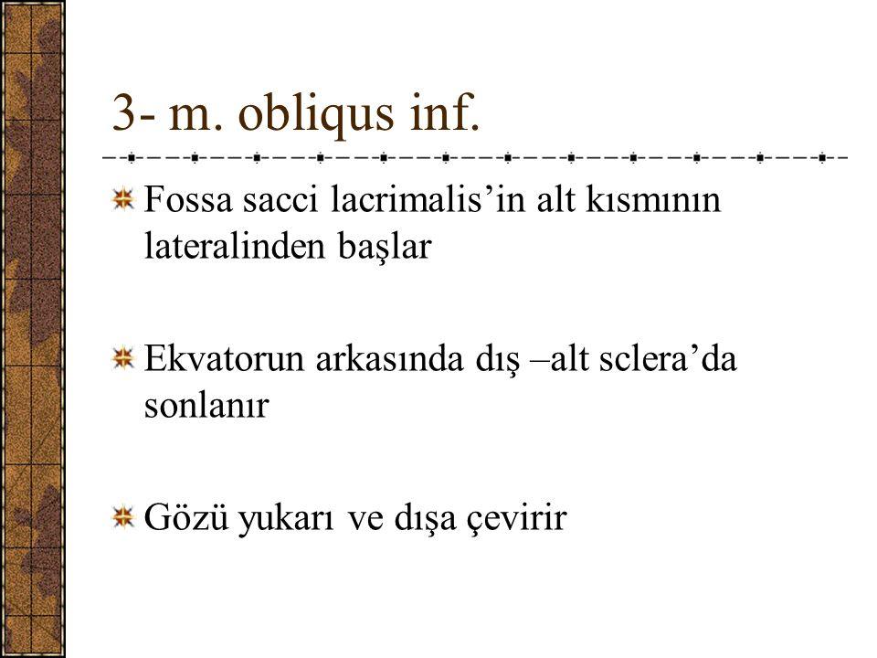 3- m.obliqus inf.