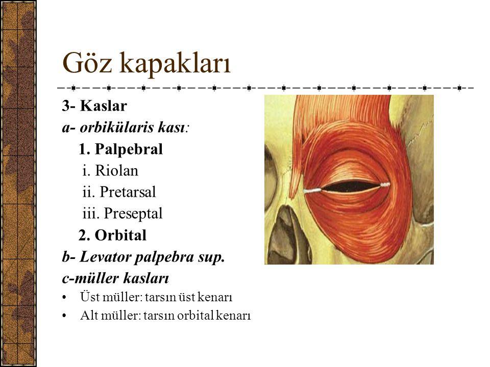 Göz kapakları 3- Kaslar a- orbikülaris kası: 1.Palpebral i.