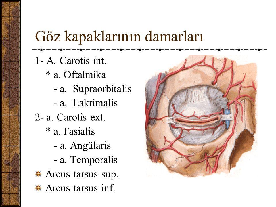 Göz kapaklarının damarları 1- A.Carotis int. * a.
