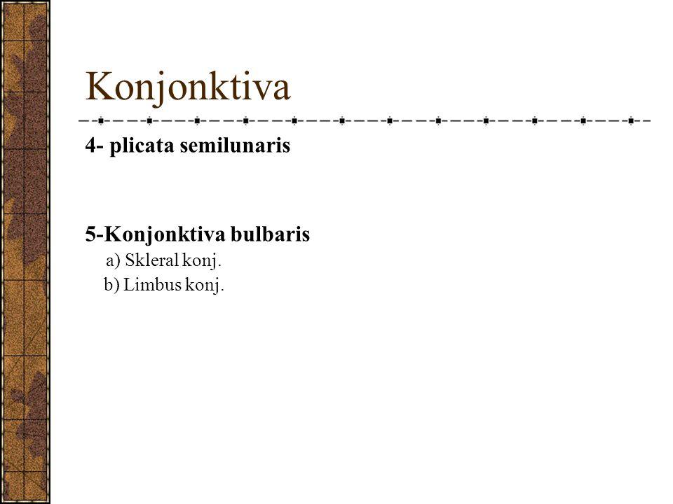 Konjonktiva 4- plicata semilunaris 5-Konjonktiva bulbaris a) Skleral konj. b) Limbus konj.