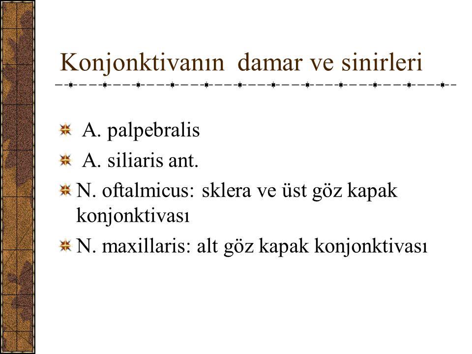 Konjonktivanın damar ve sinirleri A.palpebralis A.