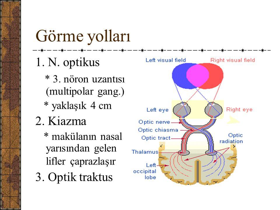 Görme yolları 1.N. optikus * 3. nöron uzantısı (multipolar gang.) * yaklaşık 4 cm 2.