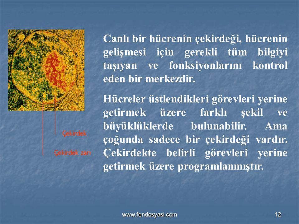 www.fendosyasi.com12 Canlı bir hücrenin çekirdeği, hücrenin gelişmesi için gerekli tüm bilgiyi taşıyan ve fonksiyonlarını kontrol eden bir merkezdir.
