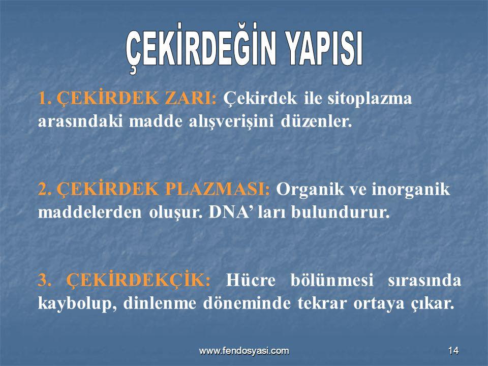 www.fendosyasi.com14 1. ÇEKİRDEK ZARI: Çekirdek ile sitoplazma arasındaki madde alışverişini düzenler. 2. ÇEKİRDEK PLAZMASI: Organik ve inorganik madd