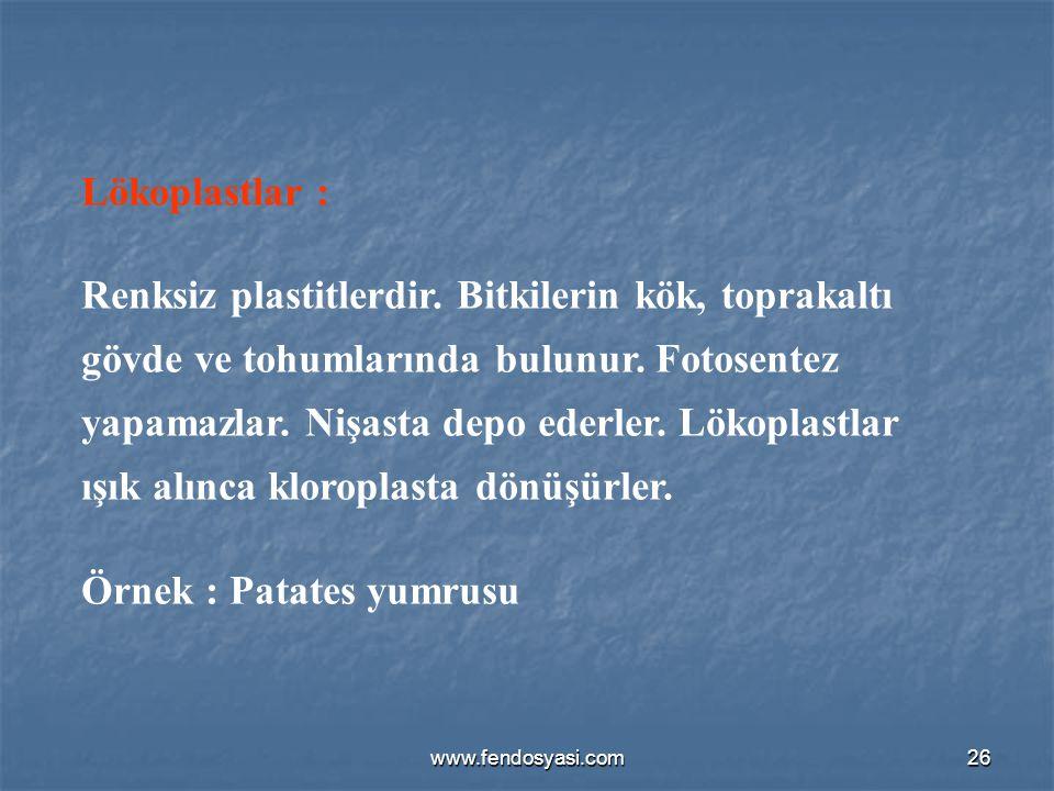 www.fendosyasi.com26 Lökoplastlar : Renksiz plastitlerdir. Bitkilerin kök, toprakaltı gövde ve tohumlarında bulunur. Fotosentez yapamazlar. Nişasta de