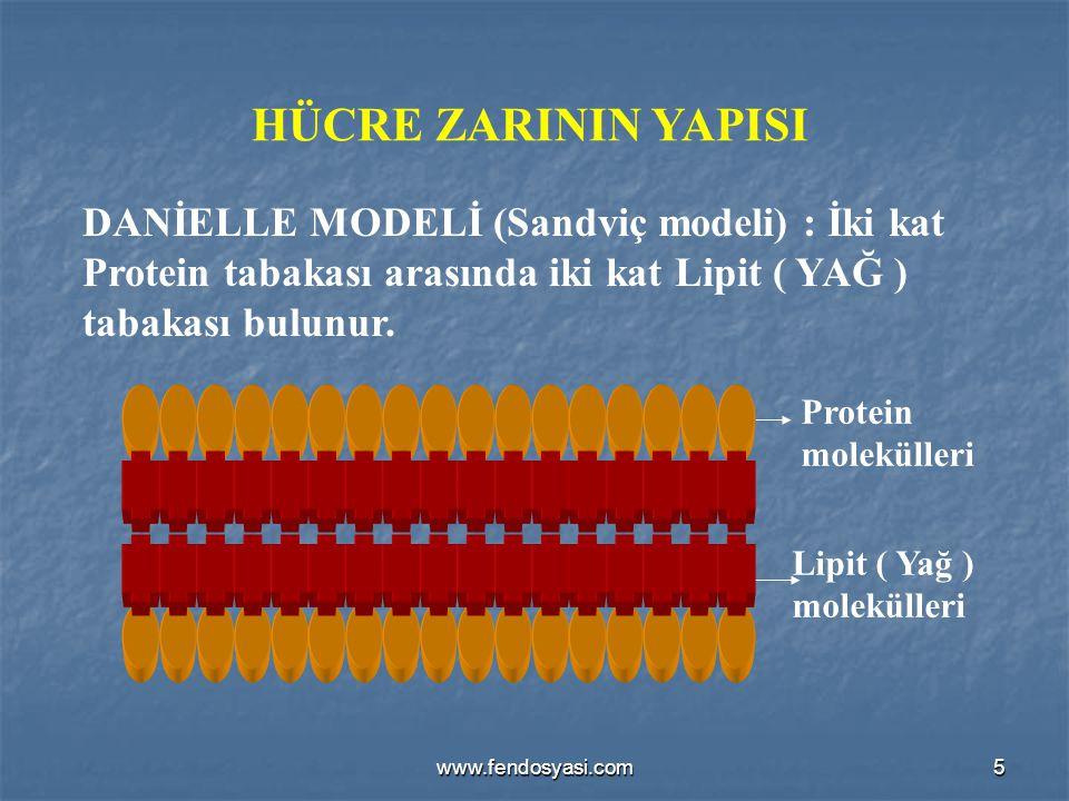 www.fendosyasi.com5 HÜCRE ZARININ YAPISI DANİELLE MODELİ (Sandviç modeli) : İki kat Protein tabakası arasında iki kat Lipit ( YAĞ ) tabakası bulunur.