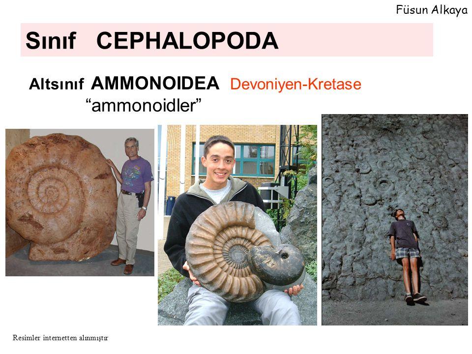 """Sınıf CEPHALOPODA Altsınıf AMMONOIDEA Devoniyen-Kretase """"ammonoidler"""" Füsun Alkaya Resimler internetten alınmıştır"""