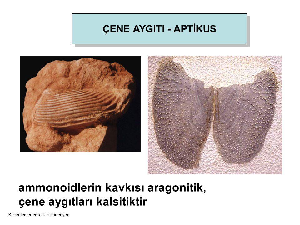 ÇENE AYGITI - APTİKUS ammonoidlerin kavkısı aragonitik, çene aygıtları kalsitiktir Resimler internetten alınmıştır