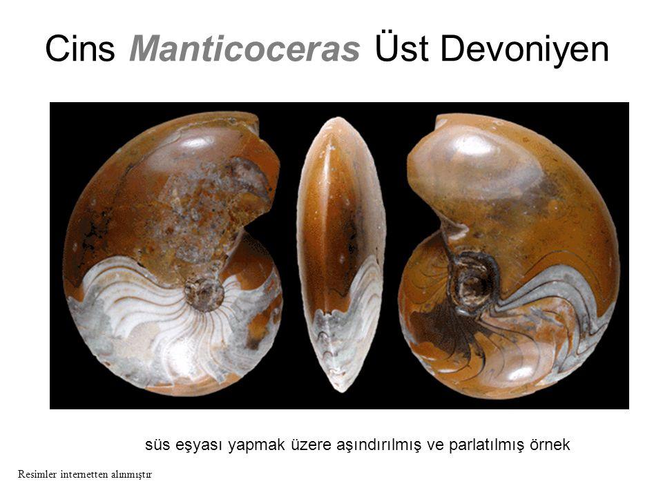 Cins Manticoceras Üst Devoniyen süs eşyası yapmak üzere aşındırılmış ve parlatılmış örnek Resimler internetten alınmıştır