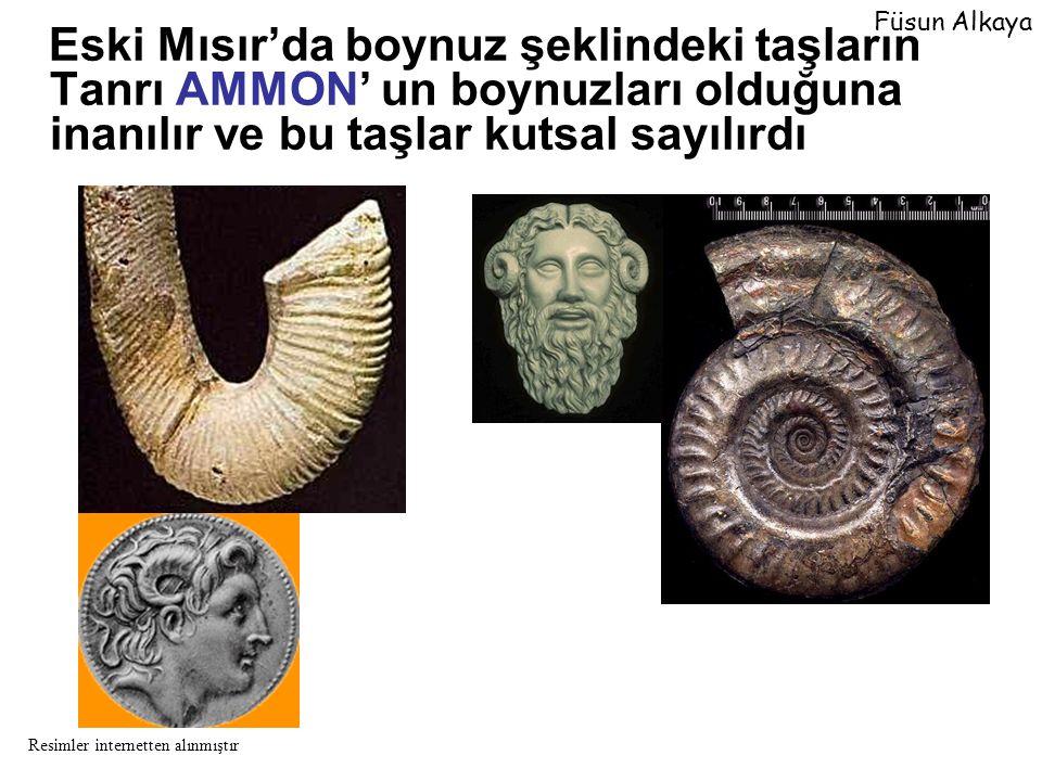 fragmokon Oturma odası fragmokon İç kalıp Ammonitik Sütur Çizgisi Füsun Alkaya Resimler internetten alınmıştır