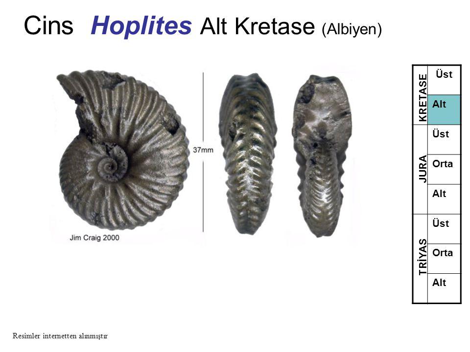 Cins Hoplites Alt Kretase (Albiyen) Üst Alt Üst Orta Alt Üst Orta Alt TRİYAS JURA KRETASE Resimler internetten alınmıştır