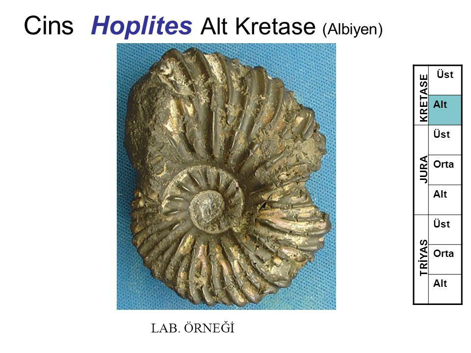 Cins Hoplites Alt Kretase (Albiyen) Üst Alt Üst Orta Alt Üst Orta Alt TRİYAS JURA KRETASE LAB. ÖRNEĞİ