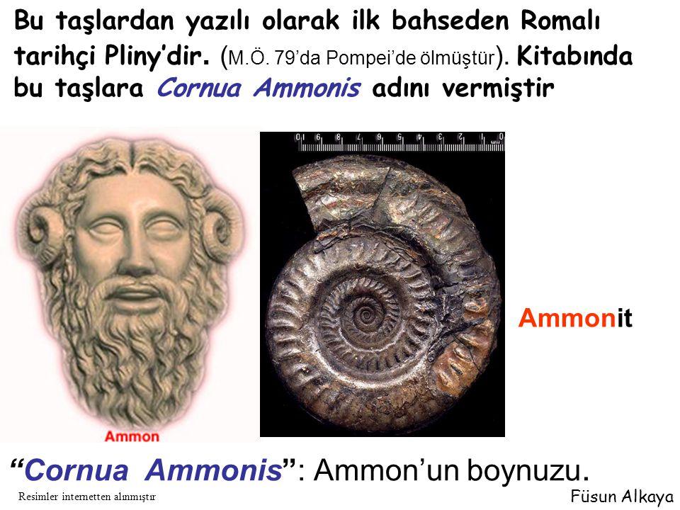 """""""Cornua Ammonis"""": Ammon'un boynuzu. Bu taşlardan yazılı olarak ilk bahseden Romalı tarihçi Pliny'dir. ( M.Ö. 79'da Pompei'de ölmüştür ). Kitabında bu"""