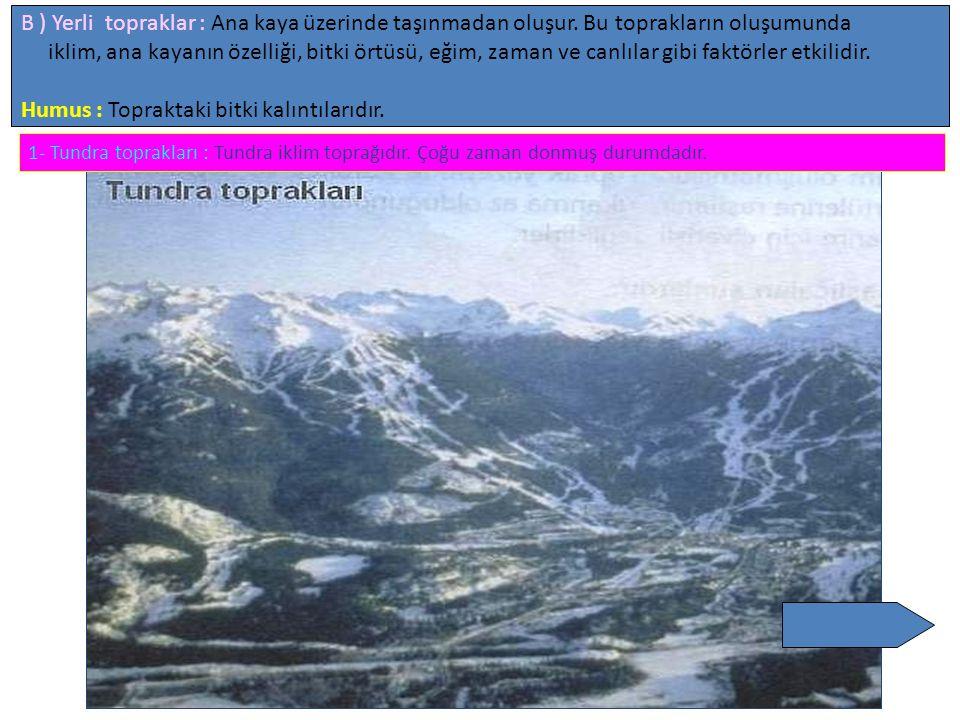 B ) Yerli topraklar : Ana kaya üzerinde taşınmadan oluşur. Bu toprakların oluşumunda iklim, ana kayanın özelliği, bitki örtüsü, eğim, zaman ve canlıla