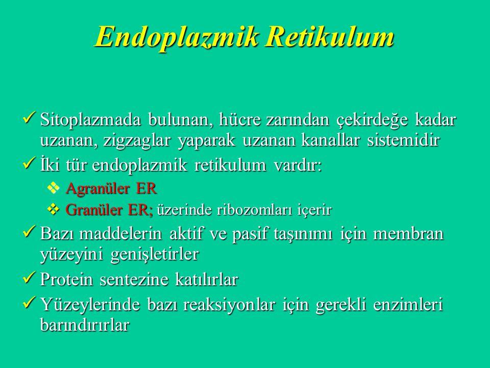 Endoplazmik Retikulum Sitoplazmada bulunan, hücre zarından çekirdeğe kadar uzanan, zigzaglar yaparak uzanan kanallar sistemidir Sitoplazmada bulunan,