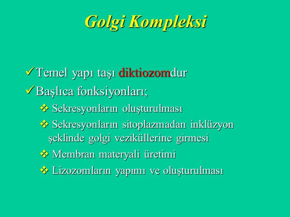Golgi Kompleksi Temel yapı taşı diktiozomdur Temel yapı taşı diktiozomdur Başlıca fonksiyonları; Başlıca fonksiyonları;  Sekresyonların oluşturulması