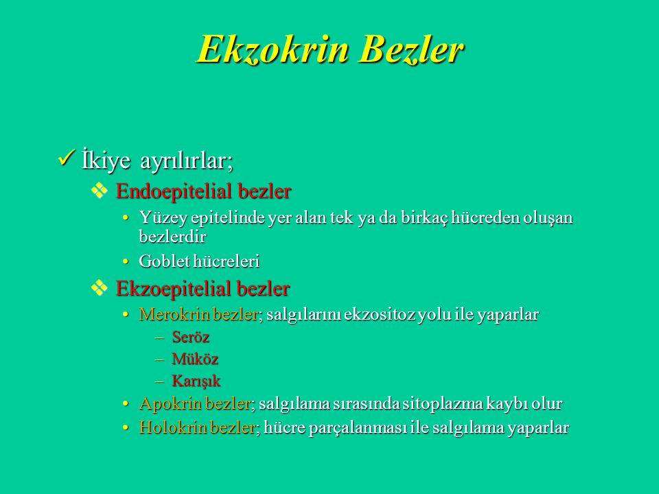 Ekzokrin Bezler İkiye ayrılırlar; İkiye ayrılırlar;  Endoepitelial bezler Yüzey epitelinde yer alan tek ya da birkaç hücreden oluşan bezlerdirYüzey e