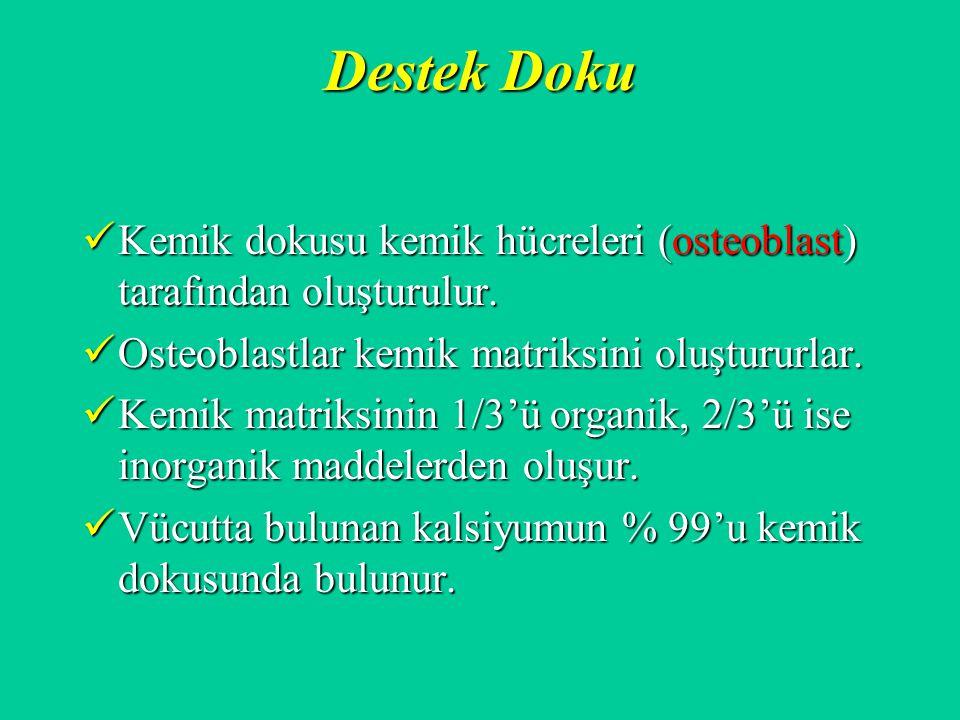 Destek Doku Kemik dokusu kemik hücreleri (osteoblast) tarafından oluşturulur. Kemik dokusu kemik hücreleri (osteoblast) tarafından oluşturulur. Osteob