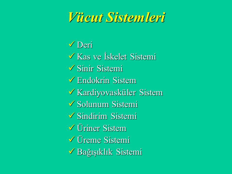Vücut Sistemleri Deri Deri Kas ve İskelet Sistemi Kas ve İskelet Sistemi Sinir Sistemi Sinir Sistemi Endokrin Sistem Endokrin Sistem Kardiyovasküler S