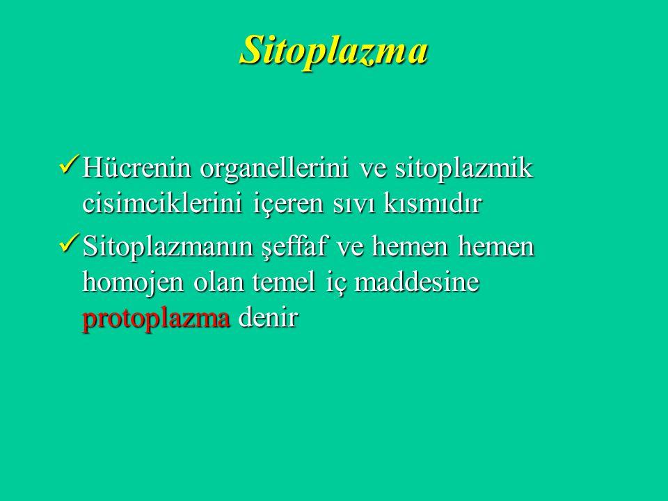 Sitoplazma Hücrenin organellerini ve sitoplazmik cisimciklerini içeren sıvı kısmıdır Hücrenin organellerini ve sitoplazmik cisimciklerini içeren sıvı