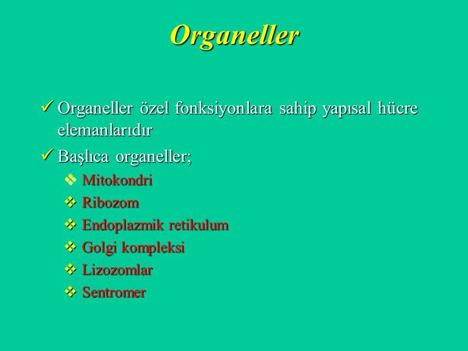 Organeller Organeller özel fonksiyonlara sahip yapısal hücre elemanlarıdır Organeller özel fonksiyonlara sahip yapısal hücre elemanlarıdır Başlıca org
