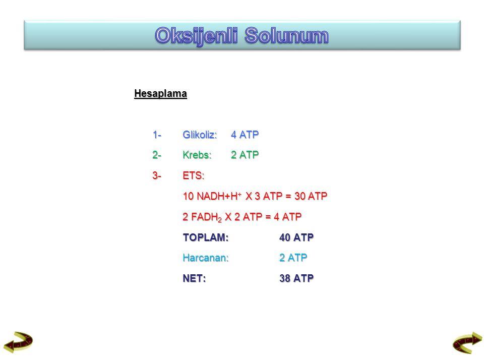 Hesaplama 1-Glikoliz:4 ATP 2- Krebs:2 ATP 3- ETS: 10 NADH+H + X 3 ATP = 30 ATP 2 FADH 2 X 2 ATP = 4 ATP TOPLAM:40 ATP Harcanan: 2 ATP NET: 38 ATP