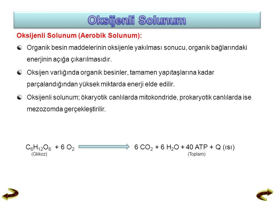 Oksijenli Solunum (Aerobik Solunum):  Organik besin maddelerinin oksijenle yakılması sonucu, organik bağlarındaki enerjinin açığa çıkarılmasıdır.  O