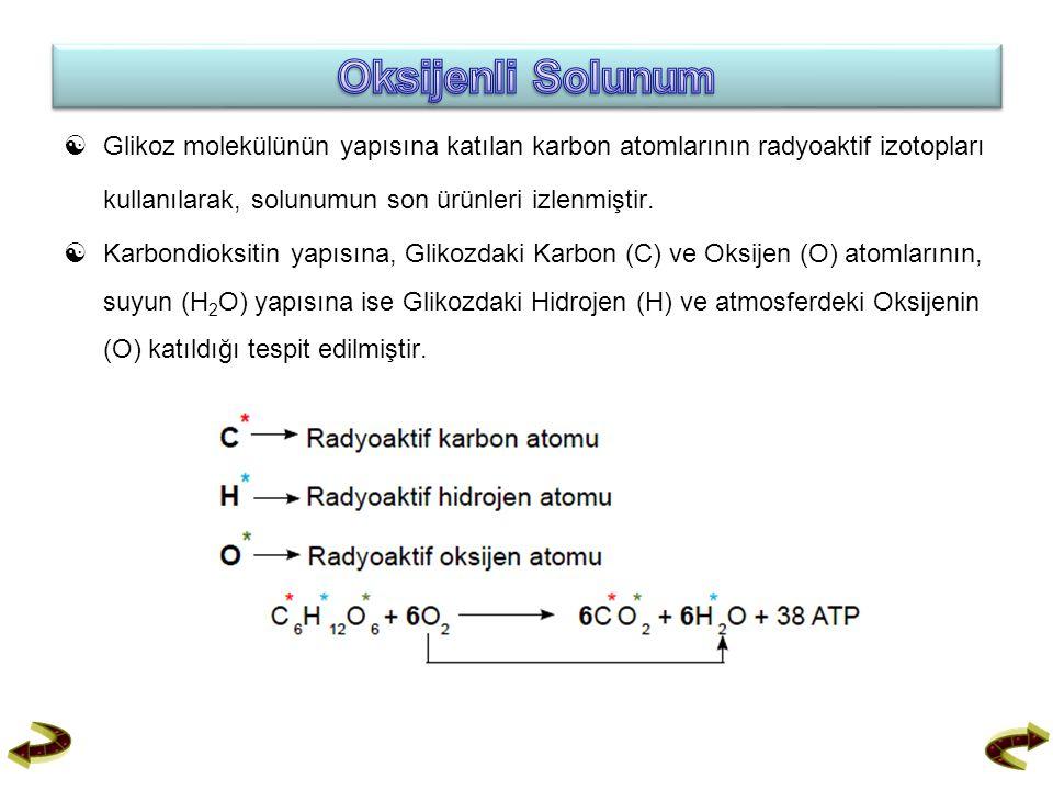  Glikoz molekülünün yapısına katılan karbon atomlarının radyoaktif izotopları kullanılarak, solunumun son ürünleri izlenmiştir.  Karbondioksitin yap
