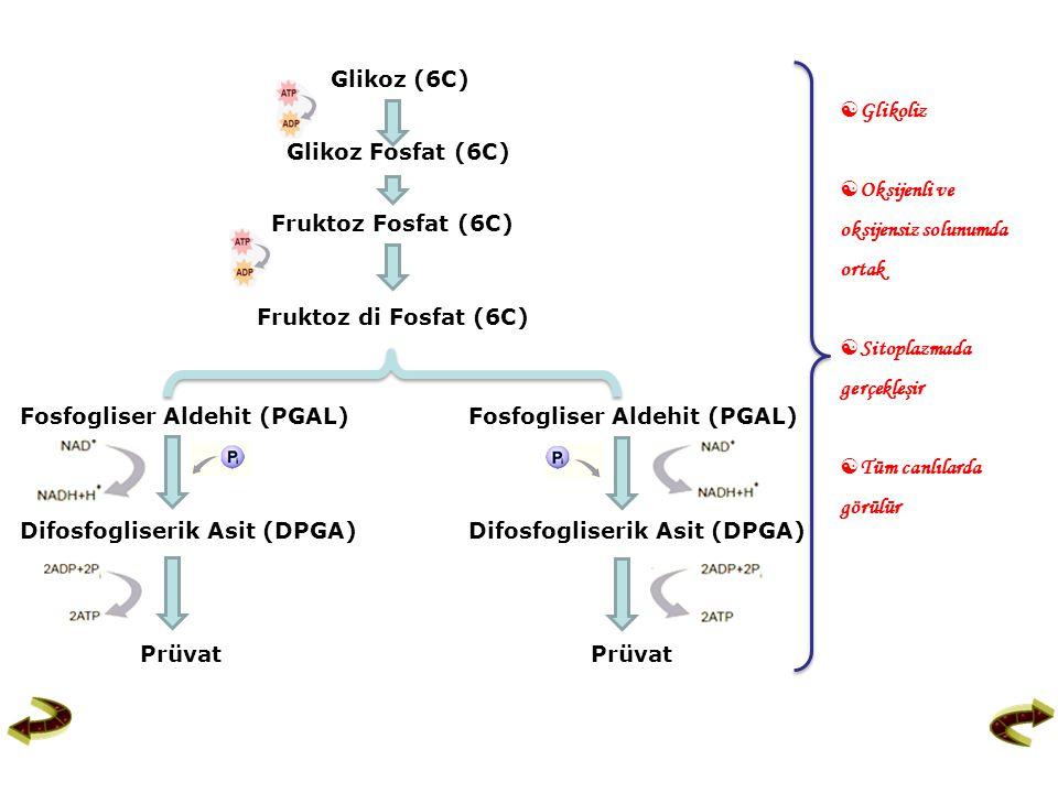 Glikoz (6C) Glikoz Fosfat (6C) Fruktoz Fosfat (6C) Fruktoz di Fosfat (6C) Fosfogliser Aldehit (PGAL) Difosfogliserik Asit (DPGA) Prüvat Prüvat  Gliko