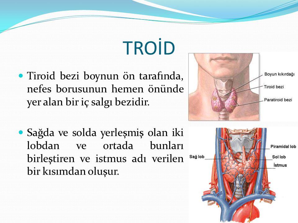 TROİD Tiroid bezi boynun ön tarafında, nefes borusunun hemen önünde yer alan bir iç salgı bezidir.