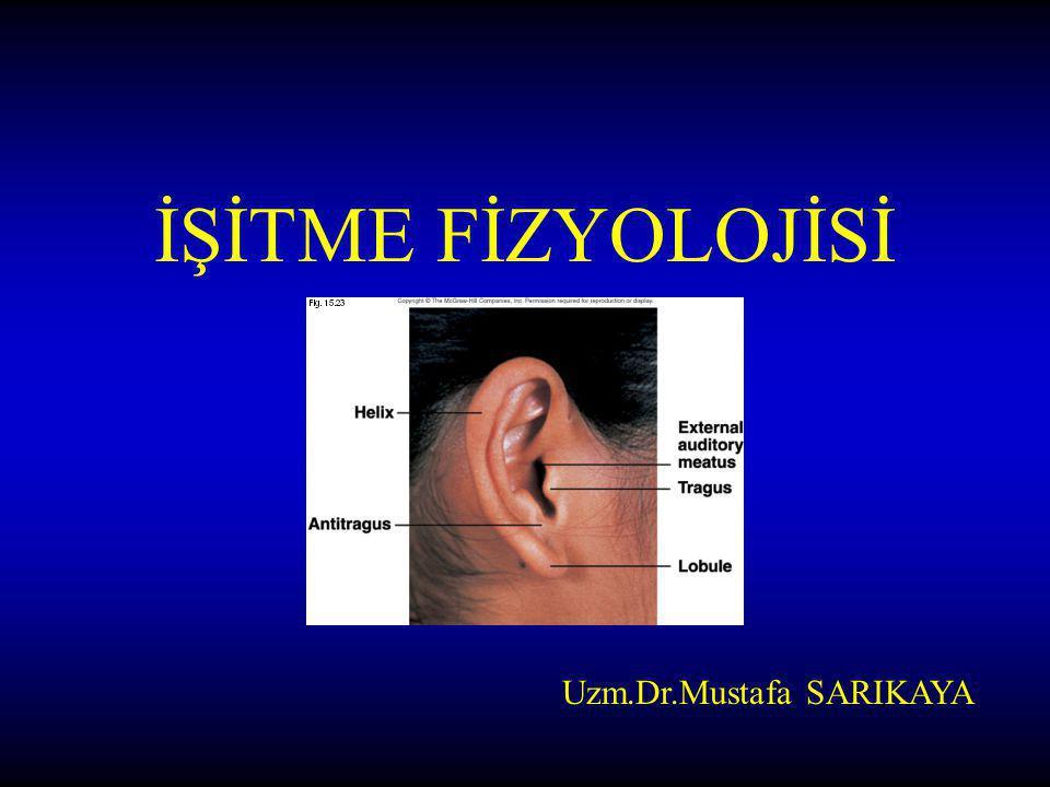 Dış Kulak –Dış kulak yolu Orta Kulak –Malleus(çekiç) –İncus (örs) –Stapes (üzengi) –Östaki Borusu