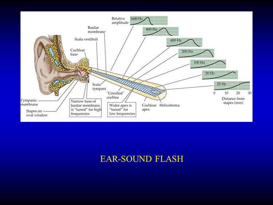 EAR-SOUND FLASH