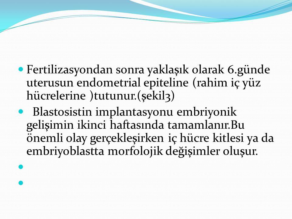Fertilizasyondan sonra yaklaşık olarak 6.günde uterusun endometrial epiteline (rahim iç yüz hücrelerine )tutunur.(şekil3) Blastosistin implantasyonu e